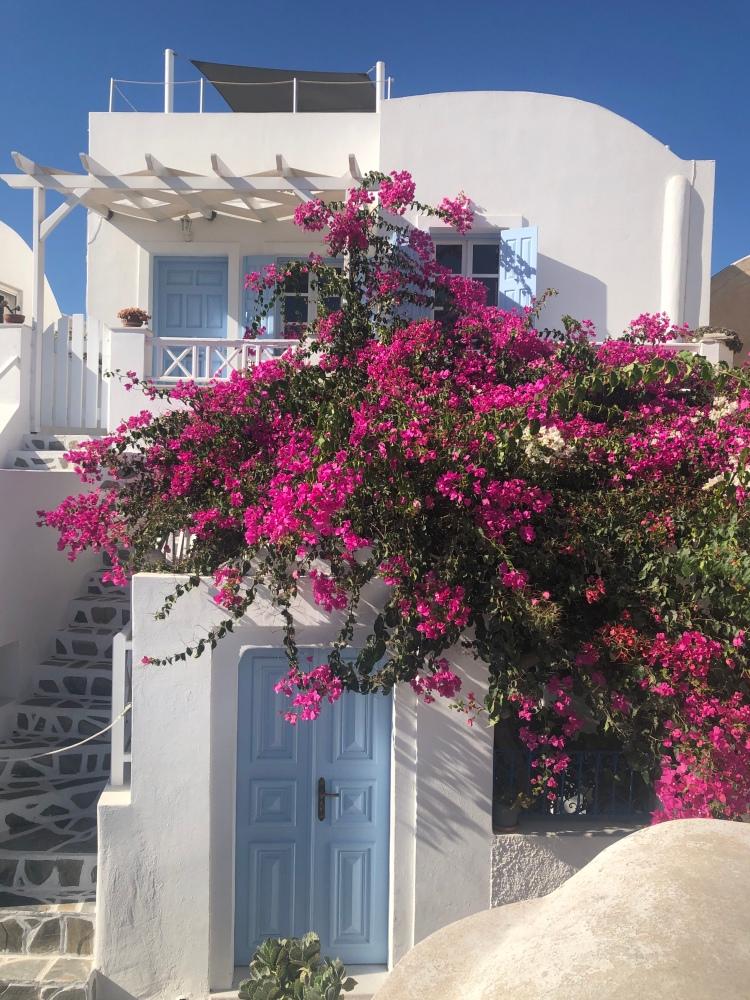 oia santorini blooming flowers